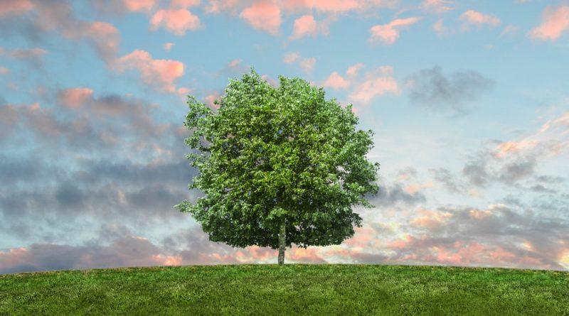 arbre agroécologie