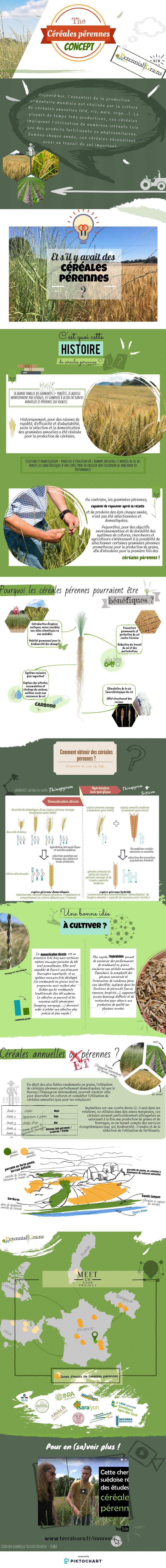 Infographie Céréales pérennes