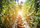 Comment construire un écosystème alimentaire vertueux ?