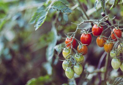 Les SYstèmes Alimentaires du Milieu