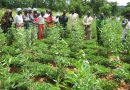 Agroecology, a way to improve farmer livelihoods now and in the future
