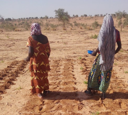 Figure 1. Women planting millet with locally selected seeds (UNDP 2015)