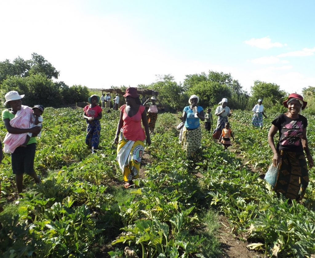 Figure 4. More members are joining farmers' associations in the hopes of benefiting from organically-certified production; © G. McAllister