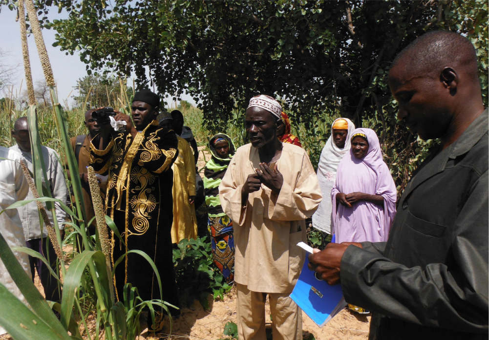Figure 4. Peer-to-peer learning and dissemination on farmers' fields (UNDP 2015)