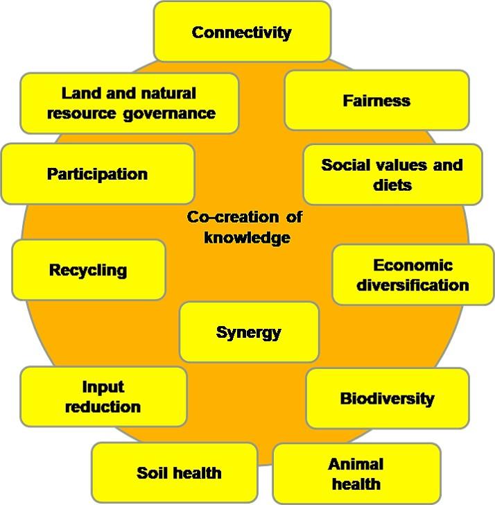 Figure 1. Agroecological principles. Adapted from Wezel et al. (2020)