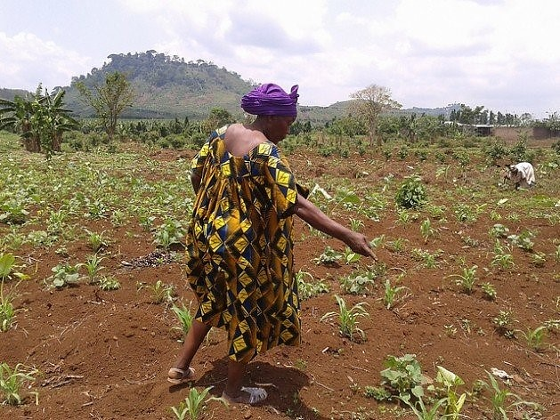 Figure 1. A farmer's intercropped field in Shashe, a village in Masvingo Province, Zimbabwe, which is becoming a school for agroecology, knowledge exchange and emancipation