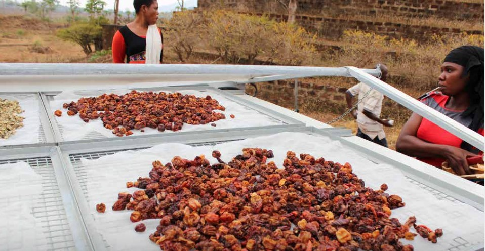 Figure 2: Drying pepper with solar-driers (UNDP 2017)