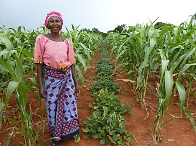 Figure 2. Row intercropping of maize with legumes (photo form European Commission 2015)