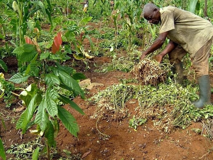Reaping-the-benefits-of-Agroforestry-in-Cameroon