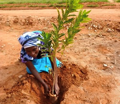 Figure 5. Tree planting on the village territory (photo form European Commission 2015)