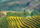 Photo de Quang Nguyen Vinh provenant de Pexels