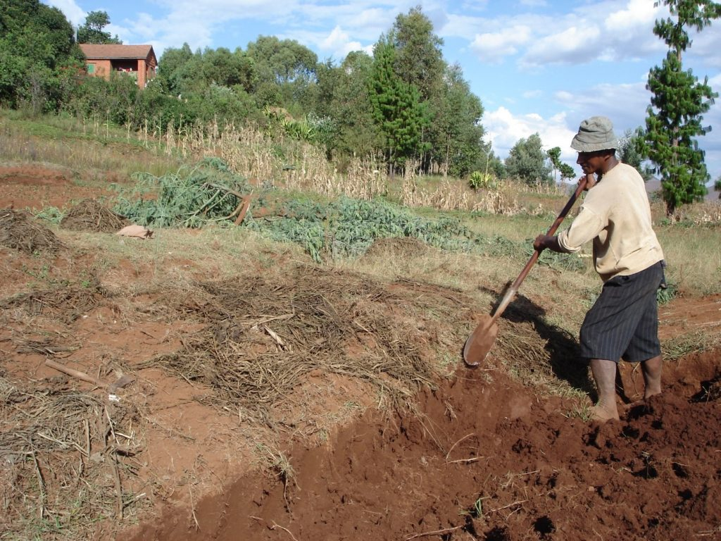 Figure 4. A farmer applies improved manure to his field that will benefit crop production; © Paulo Salgado
