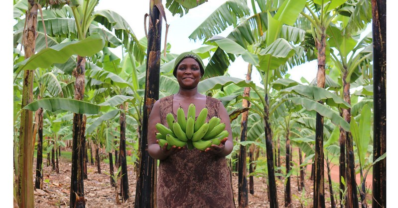 Ugandan banana farmer