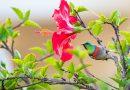 hibiscus Photo de Jean van der Meulen provenant de Pexels