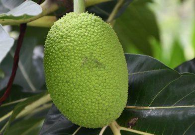 Photo de Abi Jacob provenant de Pexels - Fruit du jacquier