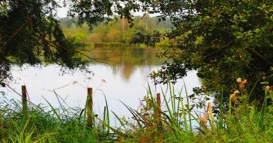 Climat : quelles solutions pour les étangs ?